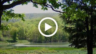 Vidéos. L'Akfadou : le paradis kabyle