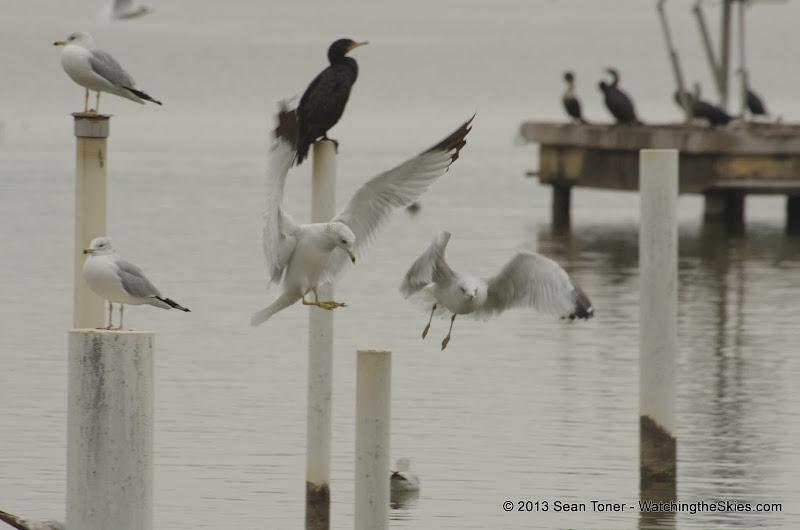 01-26-13 White Rock Lake - IMGP4378.JPG