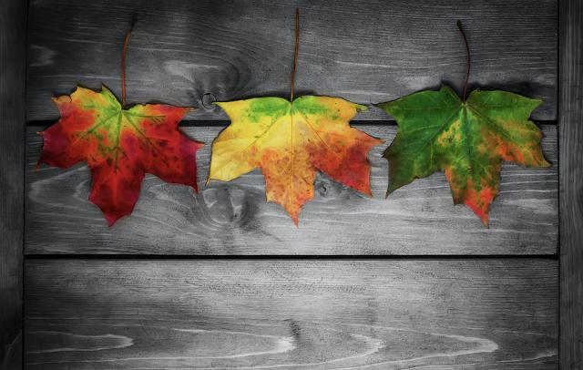 Per què les fulles canvien de color a la tardor