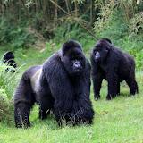 Ruanda kuvina
