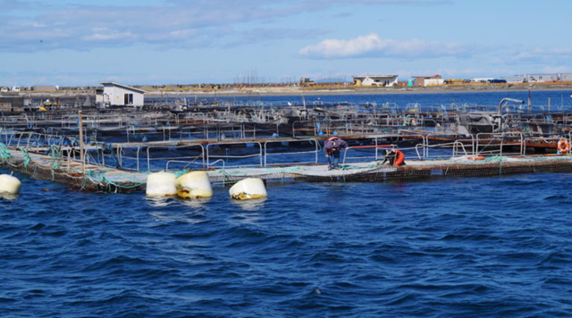 Workers at Cooke Aquaculture's net pen operation near Port Angeles, Washington. Photo: Puget Soundkeeper