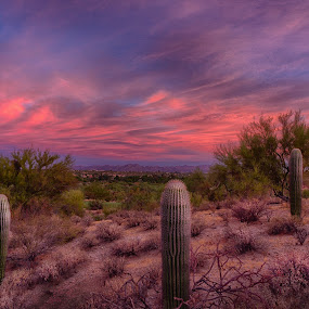 Dark by Charlie Alolkoy - Landscapes Deserts ( desert, sunset, arizona, tucson, sunrise )