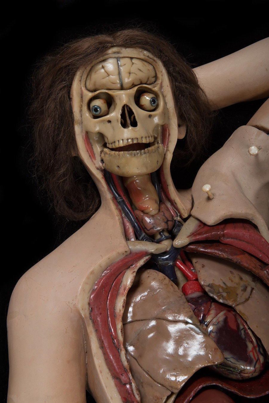 anatomical-venus-21