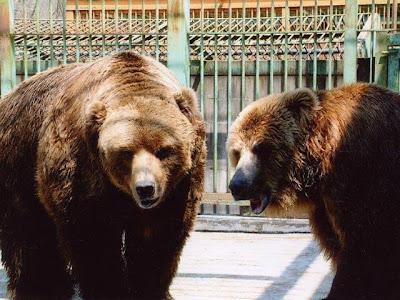 八幡平クマ牧場で女性従業員が熊に襲われ 1人負傷し応答なし1人不明 もう1頭出ているという情報
