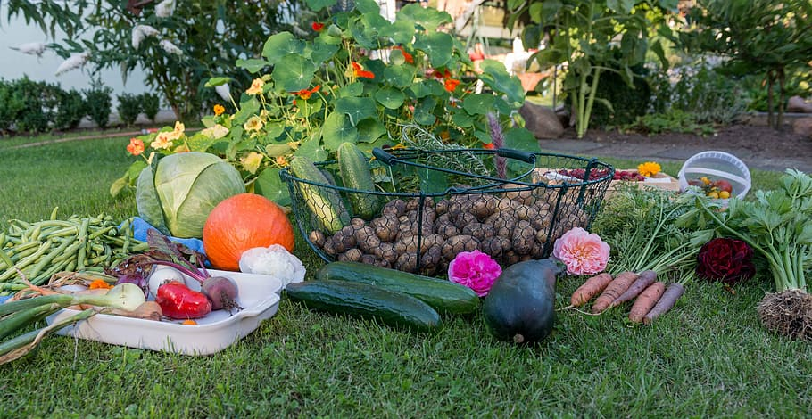 10 How to start a vegetable garden for beginners