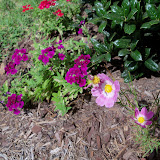 Gardening 2010, Part Three - 101_3921.JPG