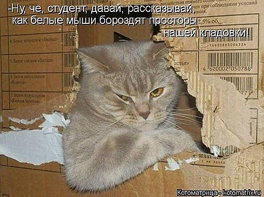 1499462145_kotomatrica-32