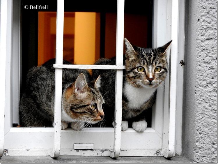 Katzen am Fenster 3
