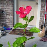 Gardening 2010, Part Three - 101_4945.JPG