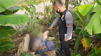 Sosok Mayat di Citamiang di Duga Akibat Gigitan Ular Berbisa