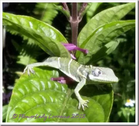 03-27-lizard