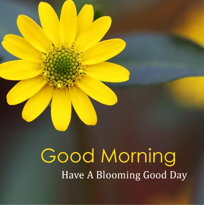 Good Morning Have a Blooming Good Day