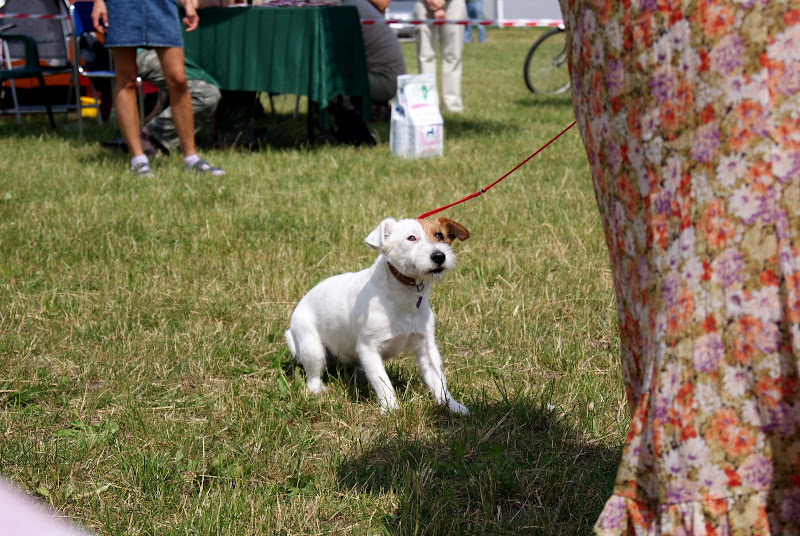 Wystawa psów - dsc00449.jpg