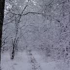 Зимняя уборка в Дендрарии 084.jpg