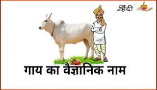 गाय का वैज्ञानिक नाम