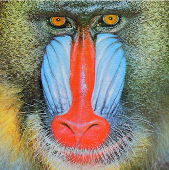 Colorful Mandrill Face