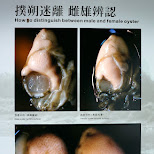 Oyster shell museum in Tainan, Taiwan in Tainan, T'ai-nan, Taiwan
