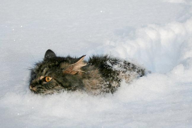 Картинки по запросу Кот сквозь снег