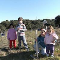Plantación en el Parque de los Alcornoques de Tres Cantos - 28 de enero de 2008