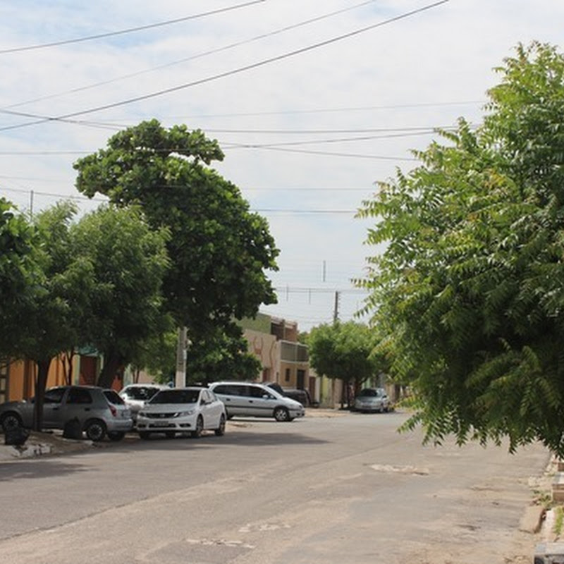 Prefeitura orienta sobre poda de árvores e disponibiliza serviço gratuitamente