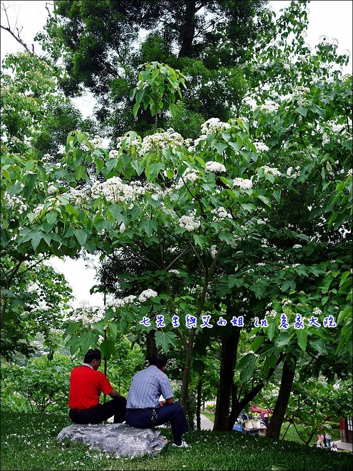 12 桐花樹下談心?