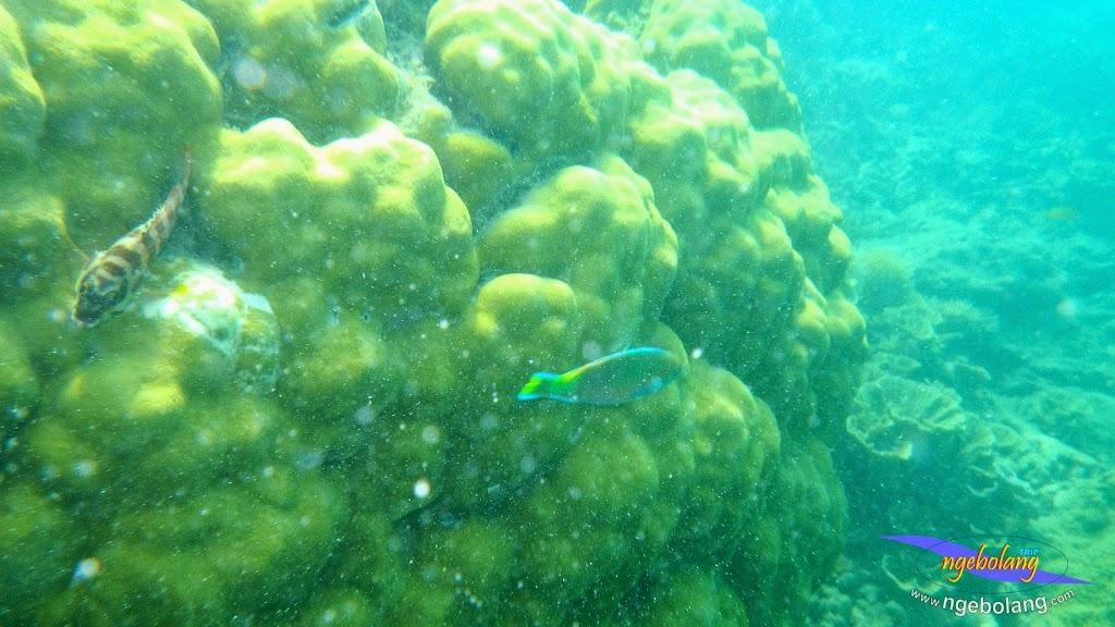 pulau pari 27-28 september 2014 pen 19