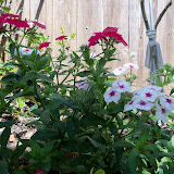 Gardening 2013 - 115_5686.JPG