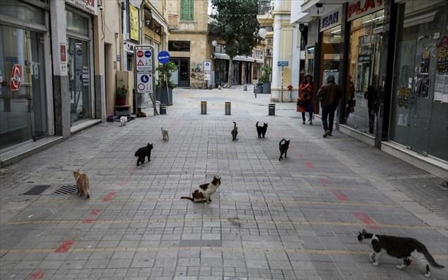 Η Κύπρος κατακλύζεται από 1 εκατομμύριο αδέσποτες γάτες