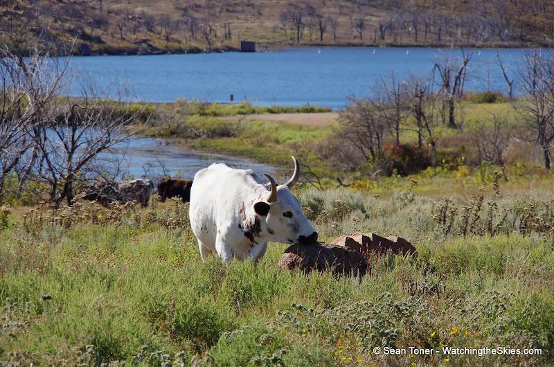 11-09-13 Wichita Mountains Wildlife Refuge - IMGP0405.JPG