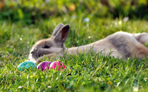 Uskrs besplatne pozadine za desktop 1920x1200 slike čestitke blagdani jaja zec free download Happy Easter