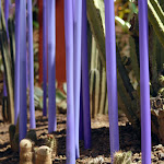 purple stalks too.jpg