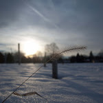 Winter 11 (8 of 11).jpg