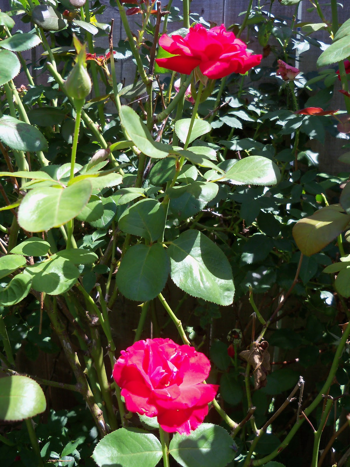 Gardening 2010, Part Three - 101_4460.JPG