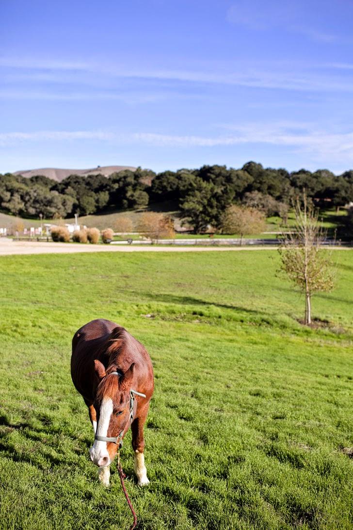 Carmel Valley Ranch for Horses.