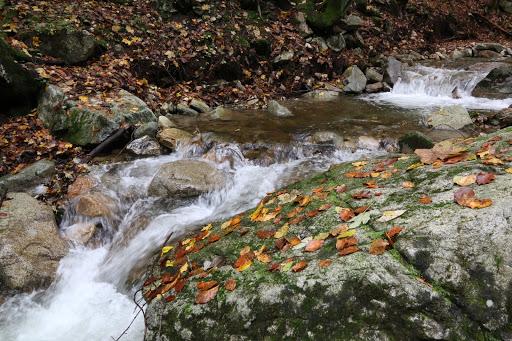 Potok v Šútovskej doline