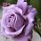 MsArtemida7's profile photo