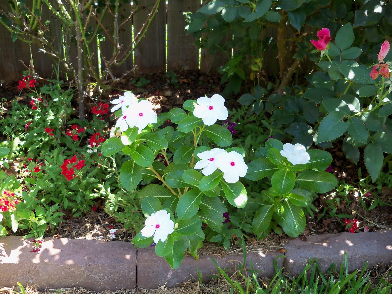 Gardening 2010, Part Three - 101_4457.JPG