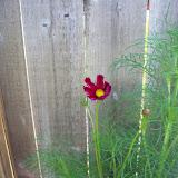 Gardening 2010, Part Two - 101_2616.JPG
