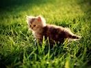 pussycat_1600.jpg