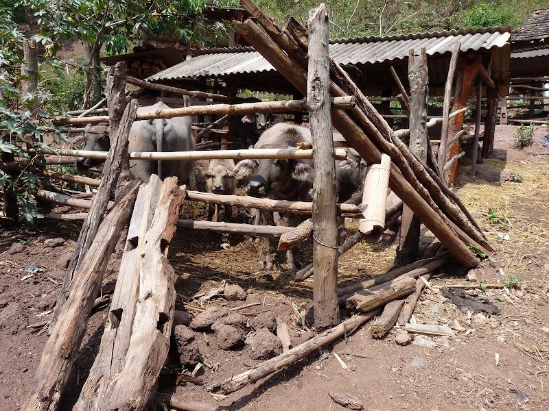 Chine: randonnée xishangbanna, région de Bada - Picture1%2B1054.jpg