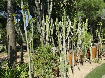 2018.08.21-027 cactus