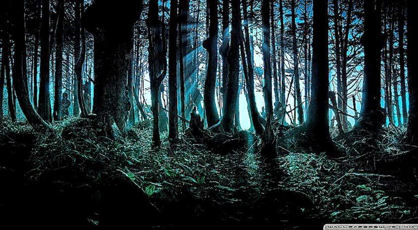 Mysterious Forest HD desktop wallpaper  Widescreen  High