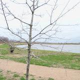 Sugar Land Memorial Park - 101_0074.JPG