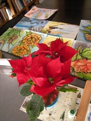 My Poinsettia 03