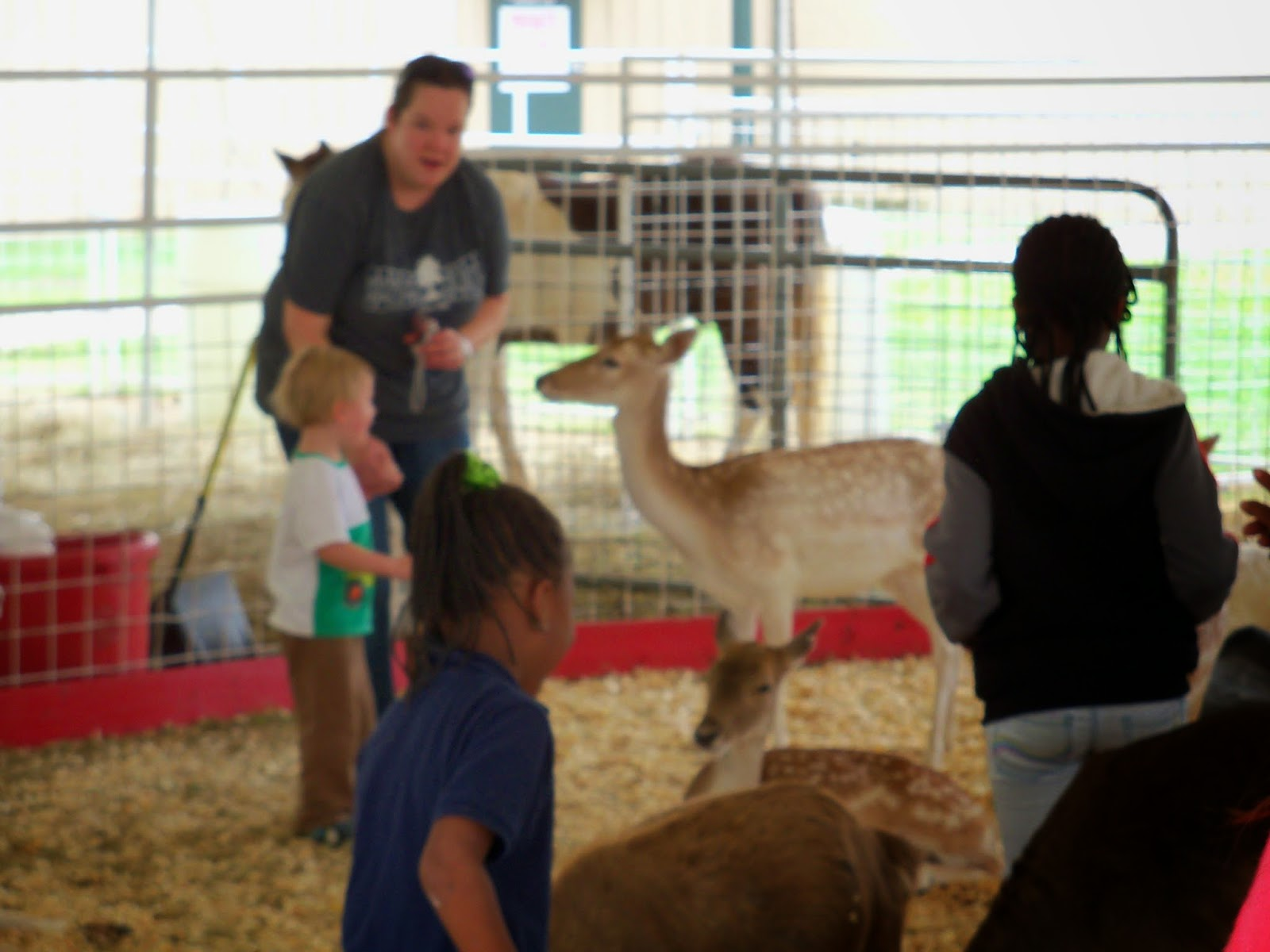 Fort Bend County Fair 2014 - 116_4284.JPG