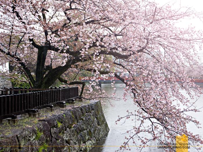 At Kanagawa's Odawara Castle