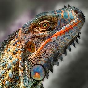 by William Underwood  - Animals Reptiles