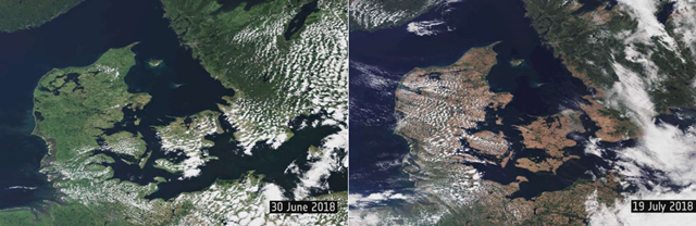 These satellite images show how the 2018 heat wave took its toll on vegetation in northern Germany, Denmark, and Sweden. The first image shows how green the vegetation looked on 30 June 2018 and how it appeared dry and brown around two weeks later, on 19 July 2018. Photo: NBCU News Group