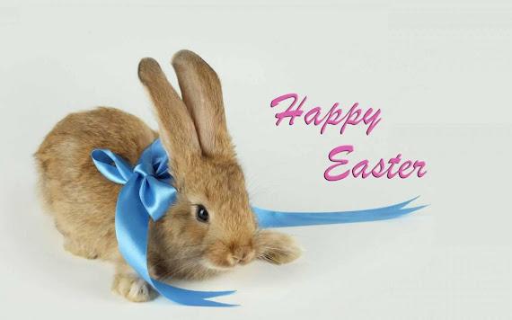 Uskrs besplatne pozadine za desktop 1680x1050 slike čestitke blagdani zec free download Happy Easter