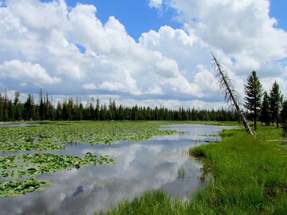 Shoestring Lake